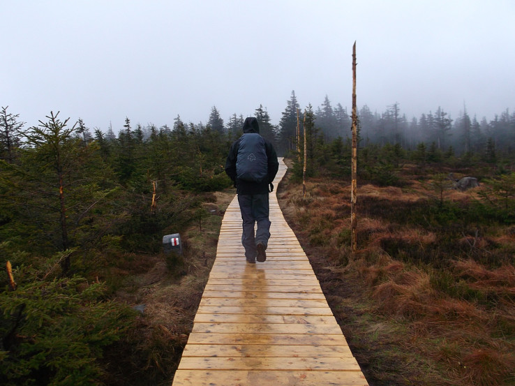 Drevený chodník bažinami