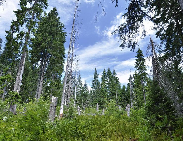 Okolie Babej hory a krásny príklad obnovy lesa