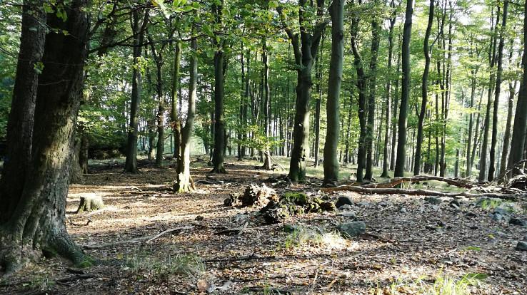 Miestami les vyzerá naozaj čarovne