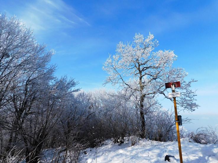 Vrchol Krivoštianky (549 m)