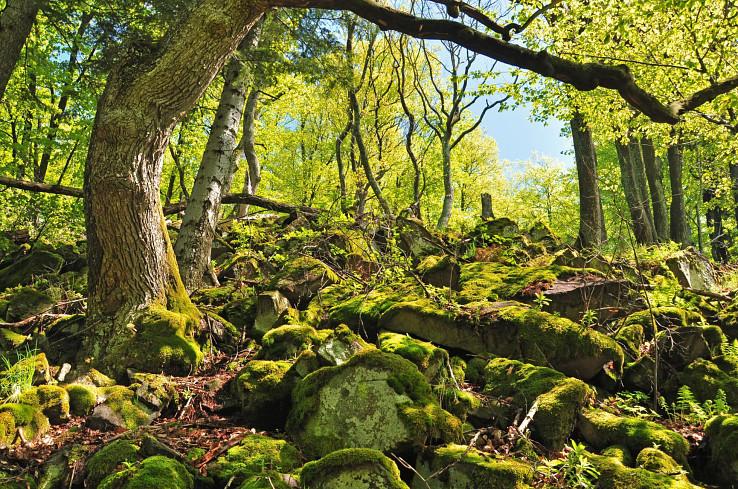 Typický výzor pralesa