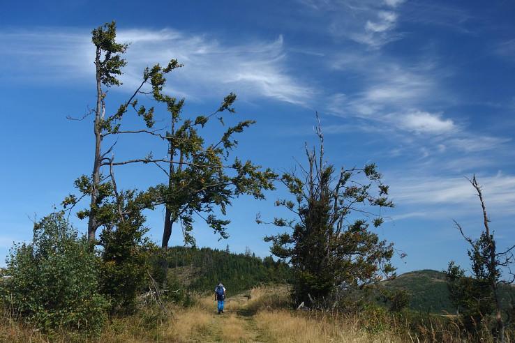 Pokrivené listnáče na hrebeni medzi Čiernohuzcom a Kuligurou