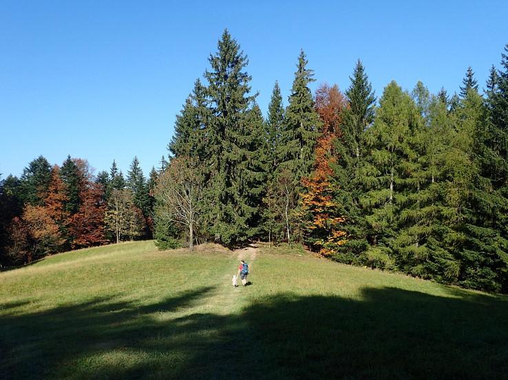 Lúky sa striedajú s lesmi