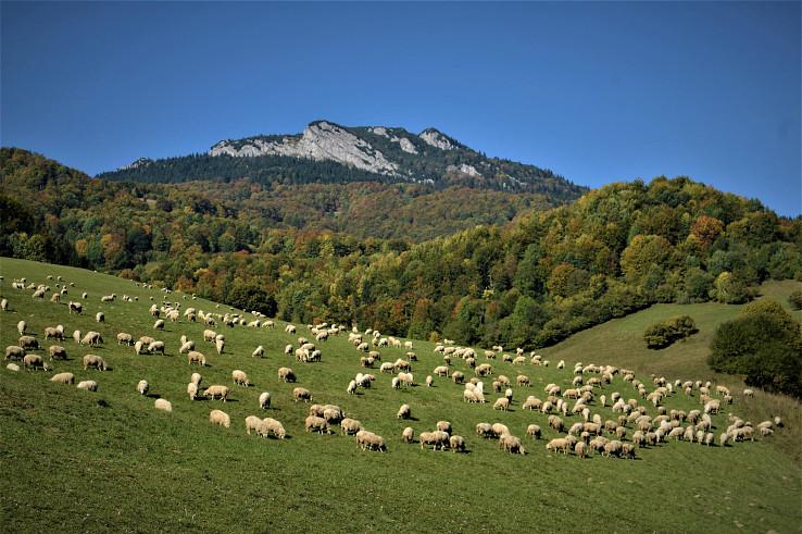 Horský kraj s ovečkami s lahodne cinkujacimi spiežovcami (autor foto: Miroslav Saniga)