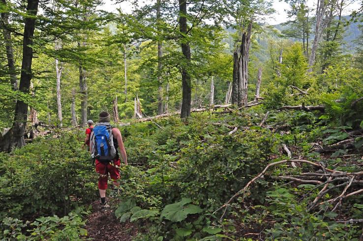 V pralese Skalná Alpa