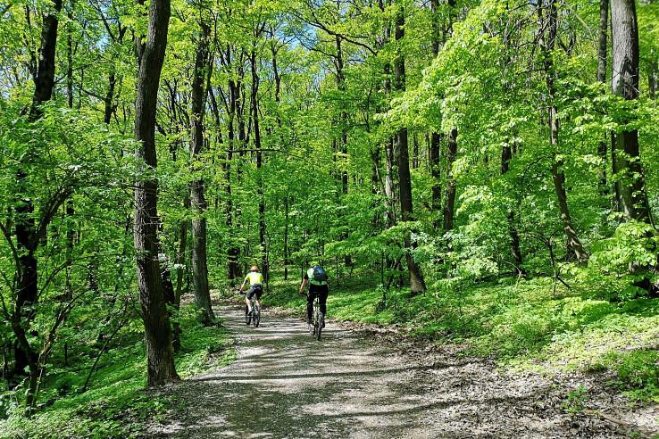 Jarný les pod bratislavským Kamzíkom