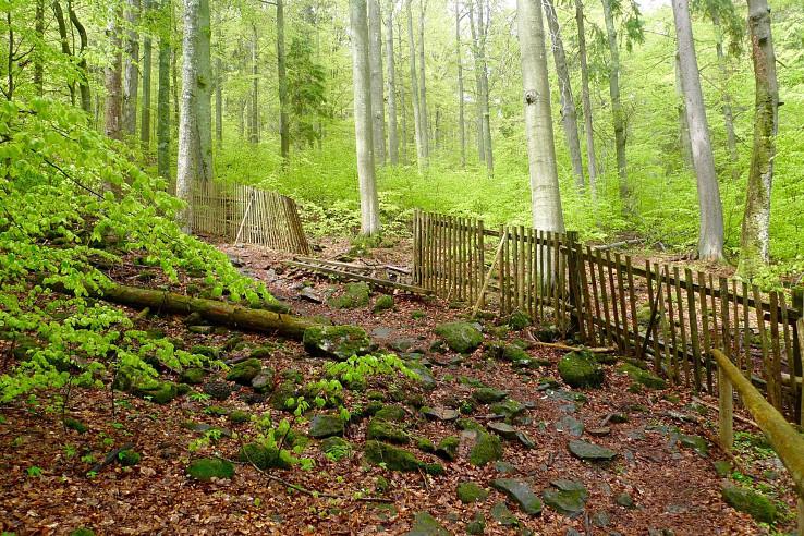 Boubínský prales, jadro pralesa chráni plot
