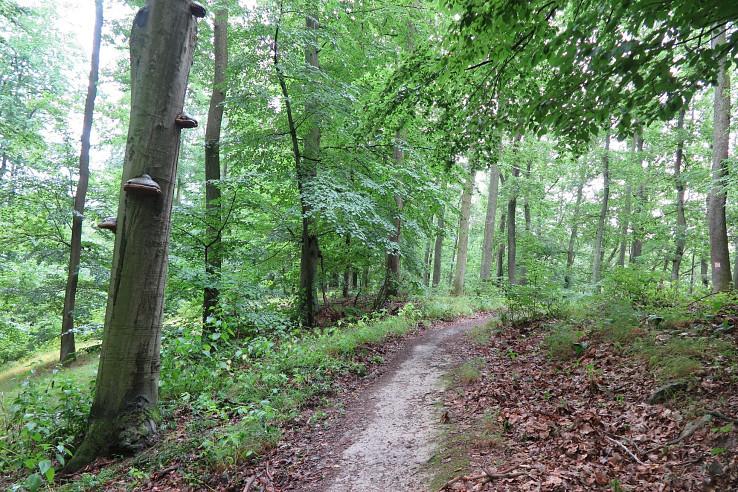 Prejazd divokým trailom