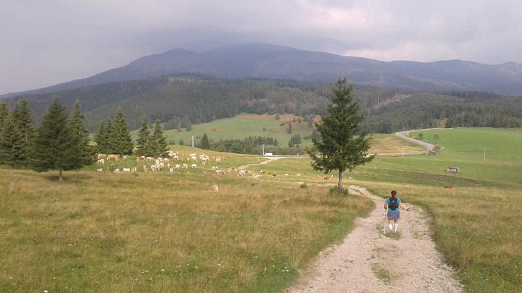 Zbeh do sedla Besník – v pozadí Kráľova hoľa