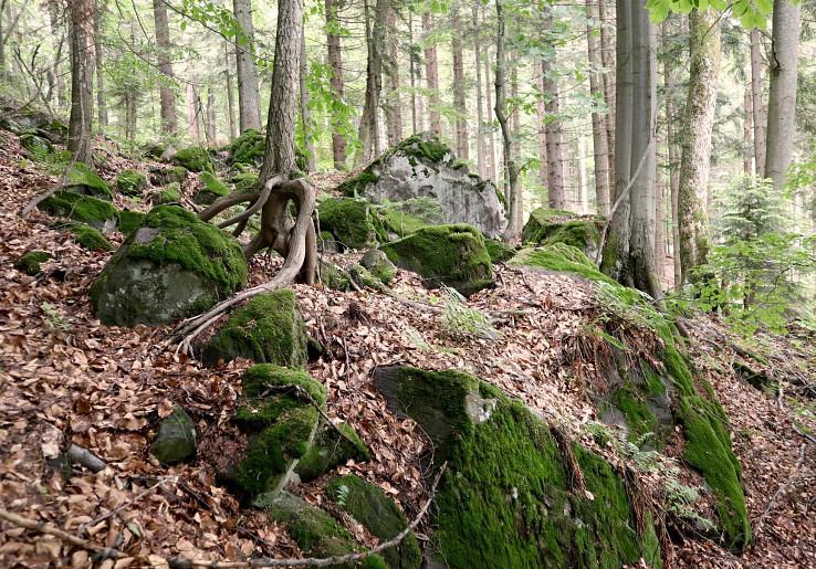 Prales Horná skala