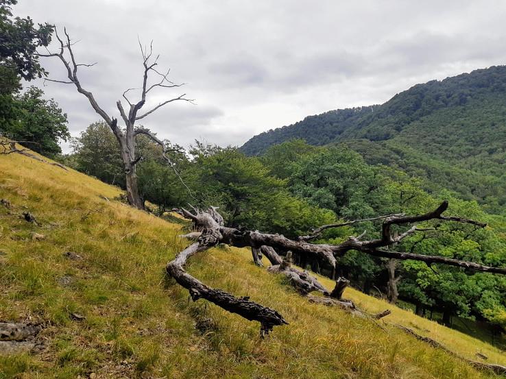 Pralesový zvyšok Zámok v Malých Karpatoch má tiež patriť do rezervácie