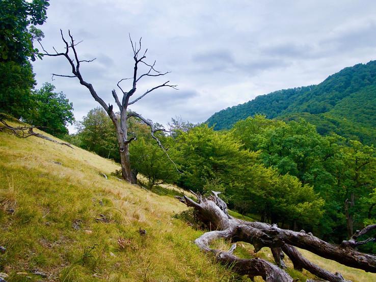 Pralesový zvyšok Zámok