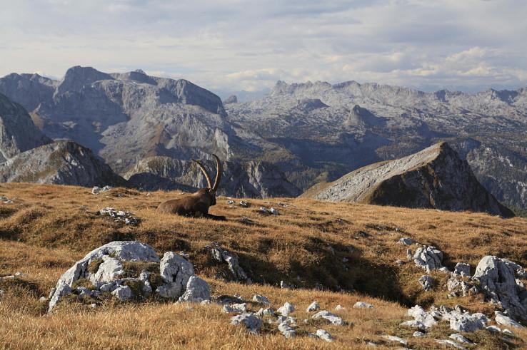 Geocaching s výhľadmi a kozorožcami na hranici Rakúska a Nemecka