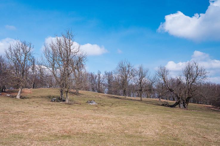 Geldek – lúka so solitérnymi stromami na západnom vrchole