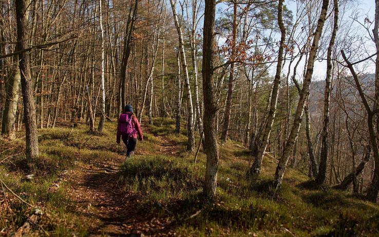 Čarovný lesík na Zrkadlovej skale