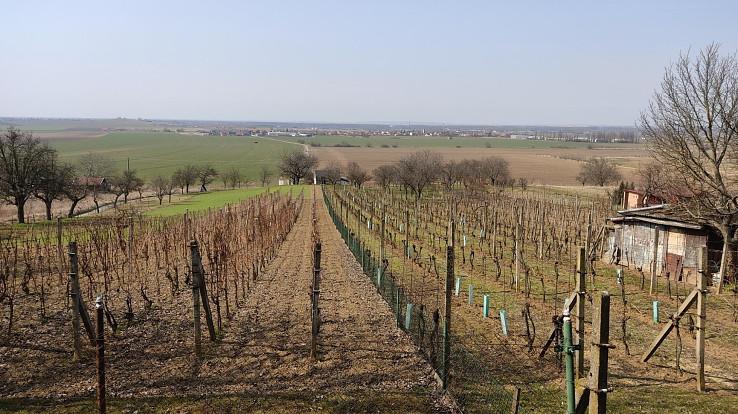 Pohľad z vinohradov na Vrádište