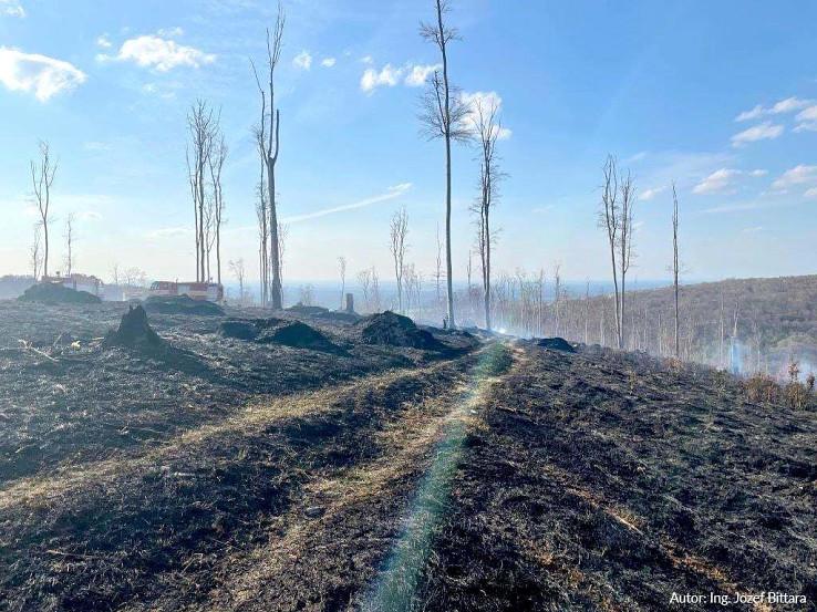 Požiar vo Vojenskom obvode Záhorie, Turecký Vrch, foto Ministerstvo obrany SR