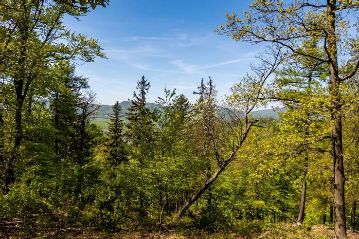 Zelená krása na hrebeni Šišoretného