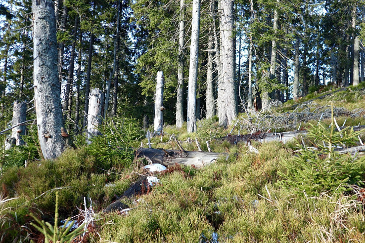 Prales Pilsko na Orave, foto Soňa Mäkká