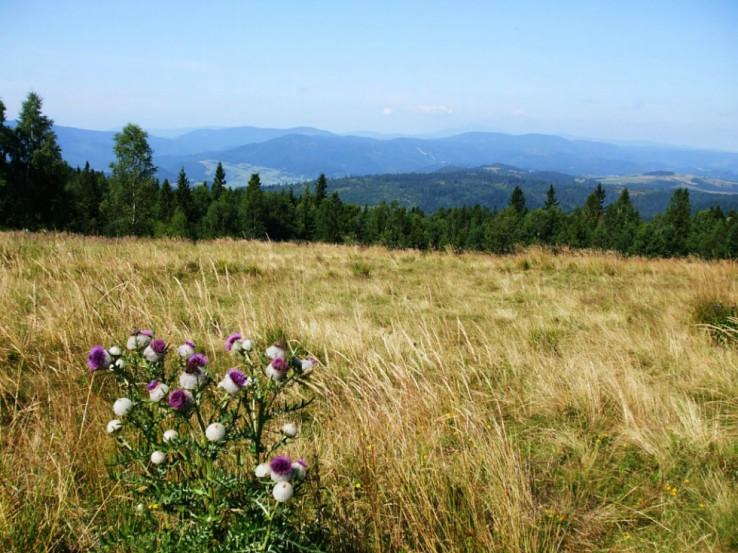 Pohľad z vrcholu Bukovca na Slovenský raj (foto z knihy Najkrajšie cyklovrcholy)