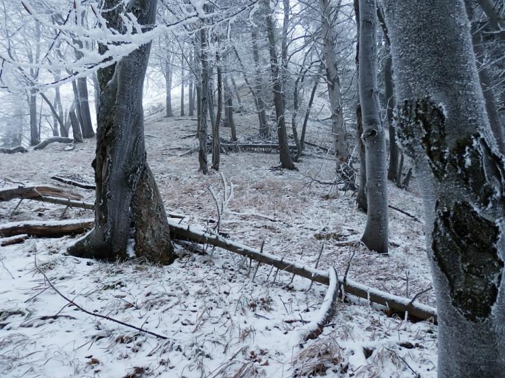 Takmer zimný Drieňok