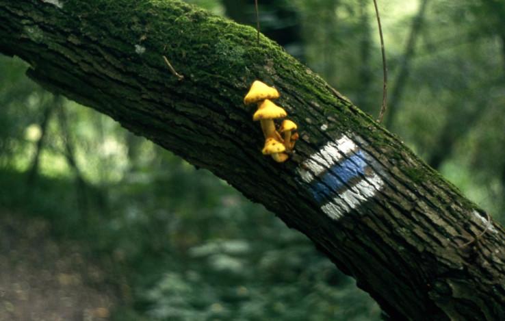 Modrá značka s hubami na strome nad chodníkom v údolí Rokytné (Boskovická brázda) (autor foto: Martin Knor)