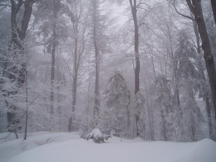 Zasneženou lesnou cestičkou