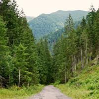 Výstup na Žiarsku chatu ide dolinou po asfaltke