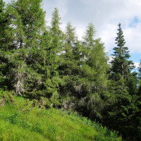 Pekný horský les