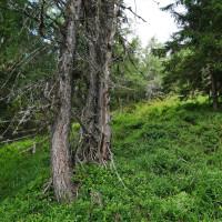 Napriek strmému zostupu stojí tento les za návštevu