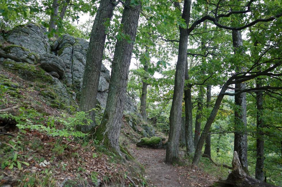 Ochranný les Skálie