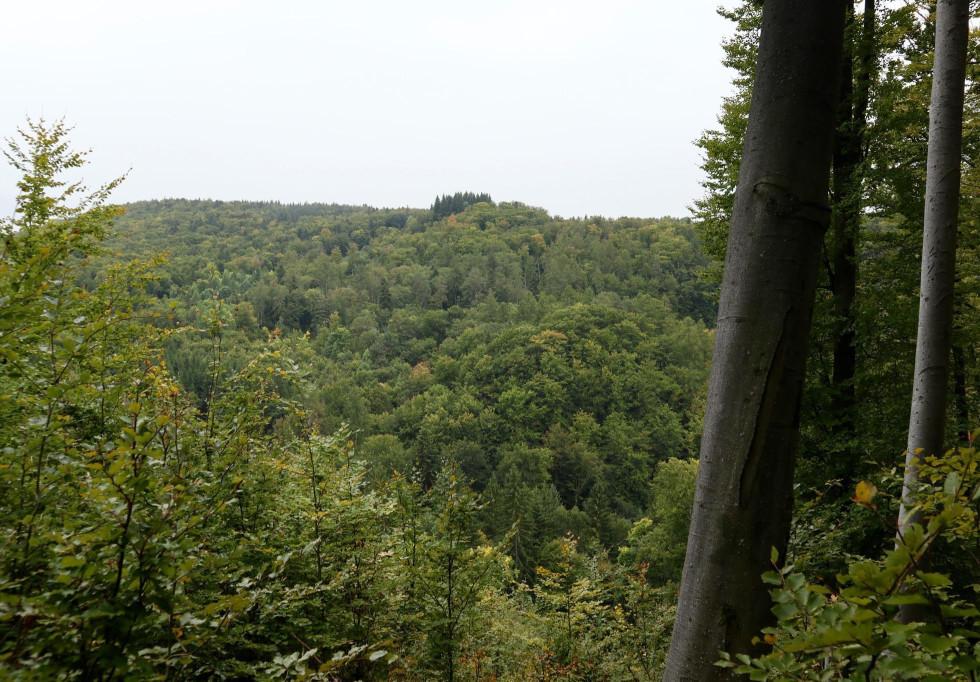 Hlavnou drevinou v týchto lesoch je buk