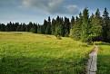 Chodníček rašeliniskom
