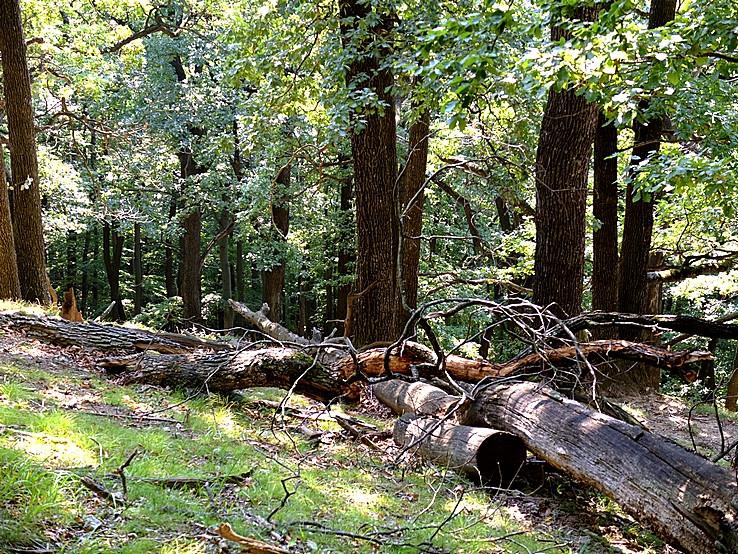 V pralese