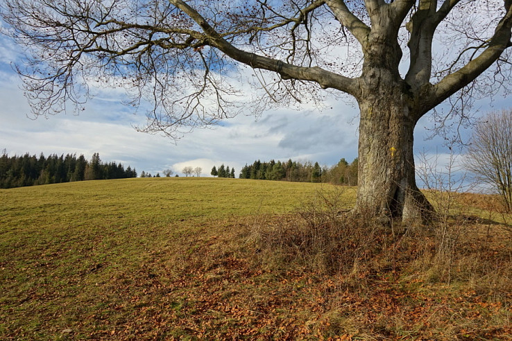 Pod košatým stromom