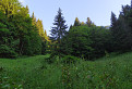 Štíhle smreky, rozkvitnutá tráva...