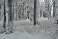 Zimný les / 1.0000