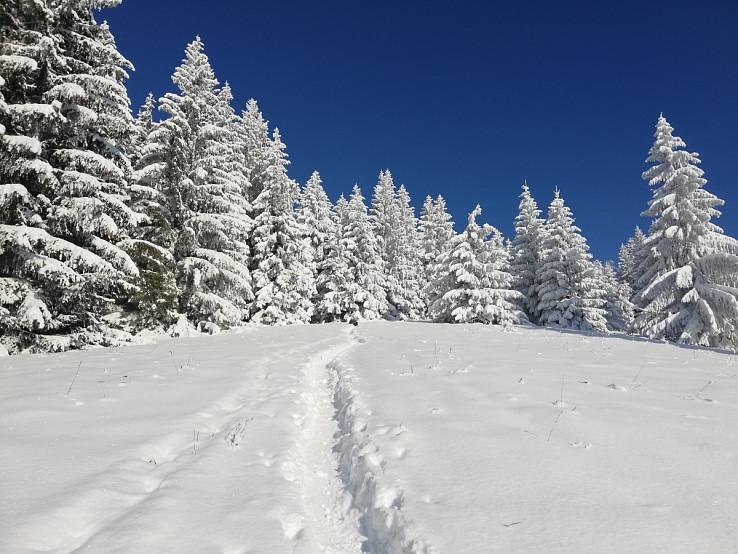 Čaro zimných zostupov