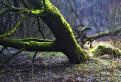 Čačínsky lužný les