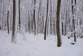 Návrat zimy