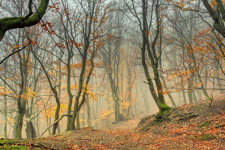 malokarpatská jesenná bučina