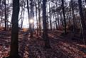 Les v okolí Dobrej Vody