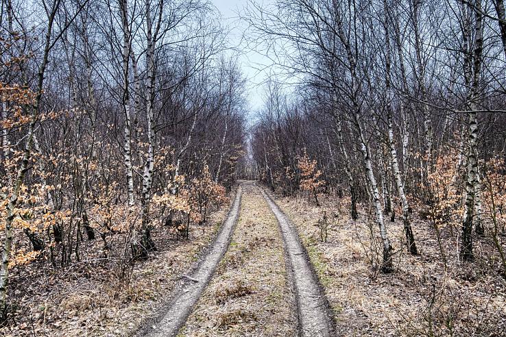 Biotop brezy previsnutej