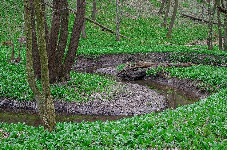 Kľukatý potok