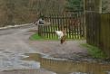 Veľkonočná kačacina