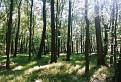 Karpatský les