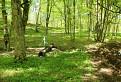 Studňa v lese