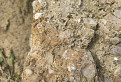 Lipovianske pieskovce - detail