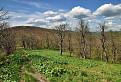 Javorovým lesom na Pľašu / 1.0000