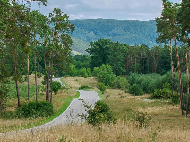 Cesta borovicovým lesom.